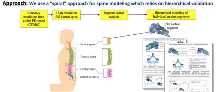 Spine Modeling in Hierarchy
